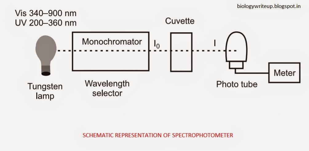 BIOLOGY WRITE-UP - BIOLOGY ARTICLES: SPECTROPHOTOMETRY: Principle ...