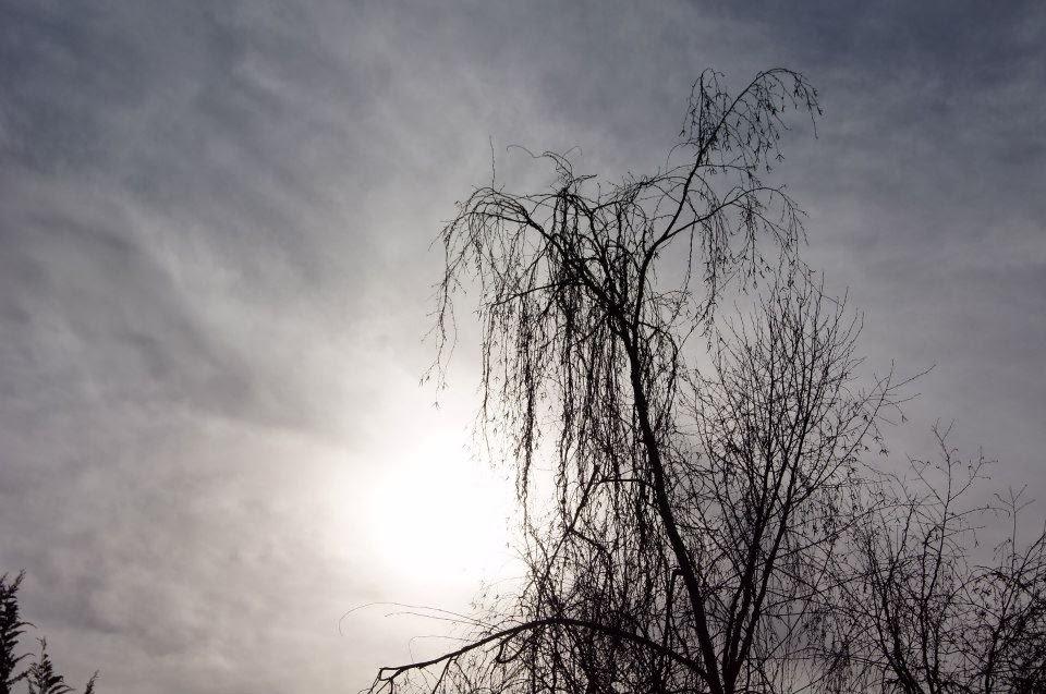 desde el piso asciende mi soledad hasta encontrarse con la brisa que hamaca las ramas dóciles.