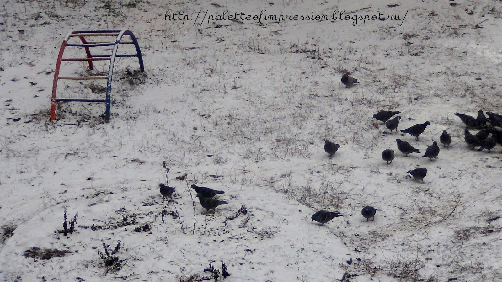 Первый снег. Блог Вся палитра впечатлений. Ижевск