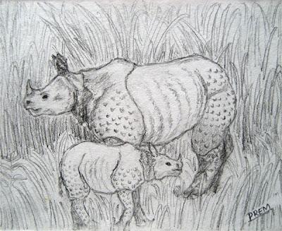 Sketch of Rhinoceros