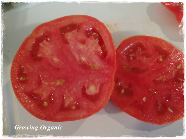 how to stop tomatoes from ripening