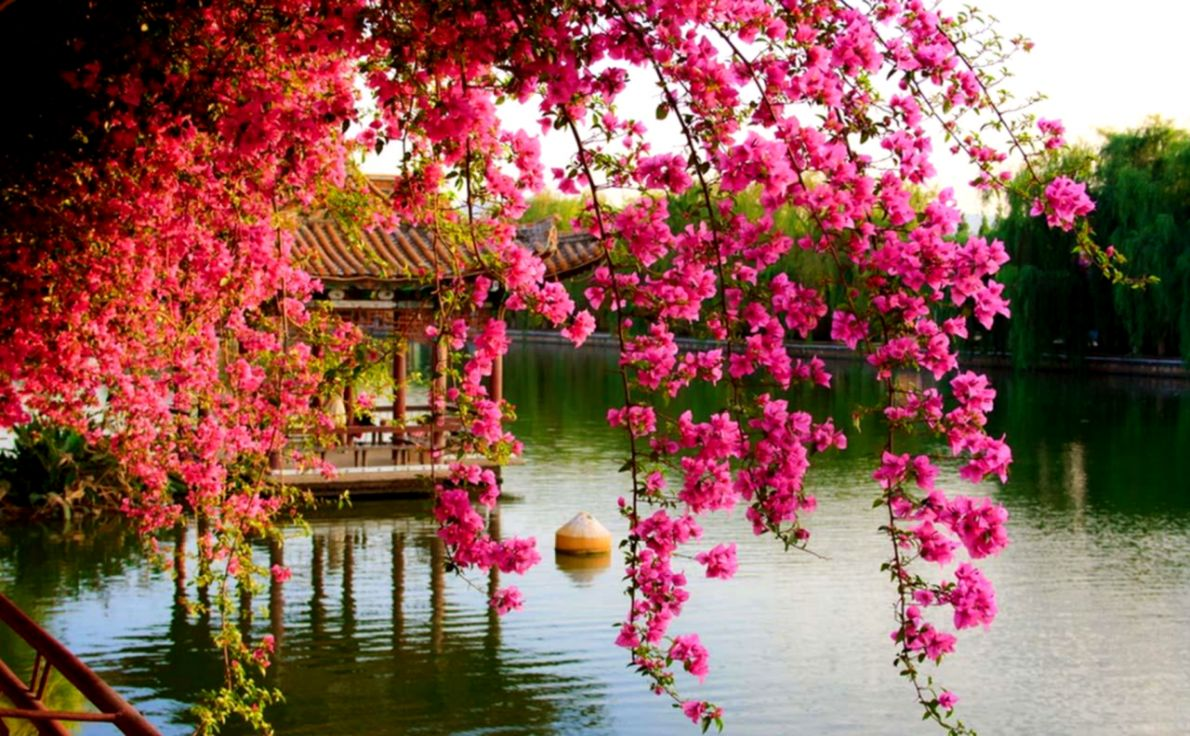 Spring Flowers Wallpapers Image Wallpapers Hd