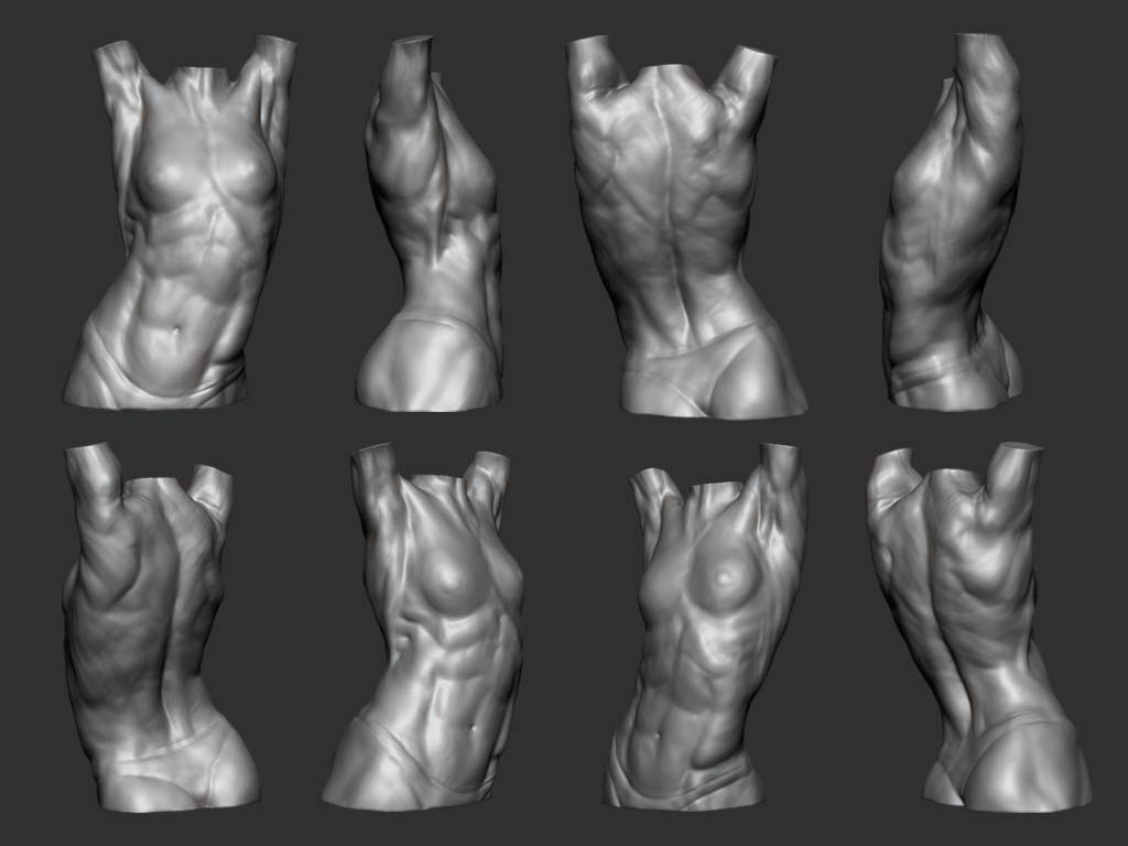 Welcome to Chris\' Blog!!: Male and Female torso studies in Zbrush