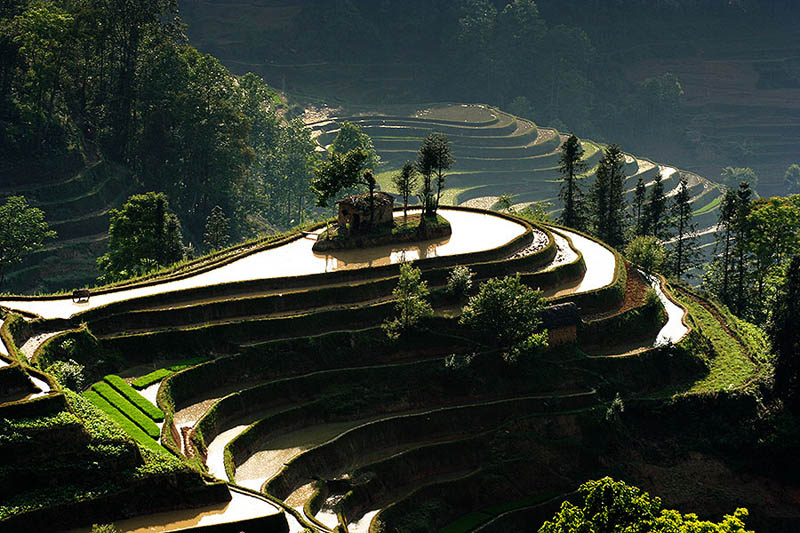Terasasta polja  Pirincana-polja-3