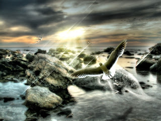 Flying Birds HD Wallpaper