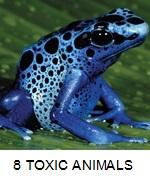 8 TOXIC ANIMALS