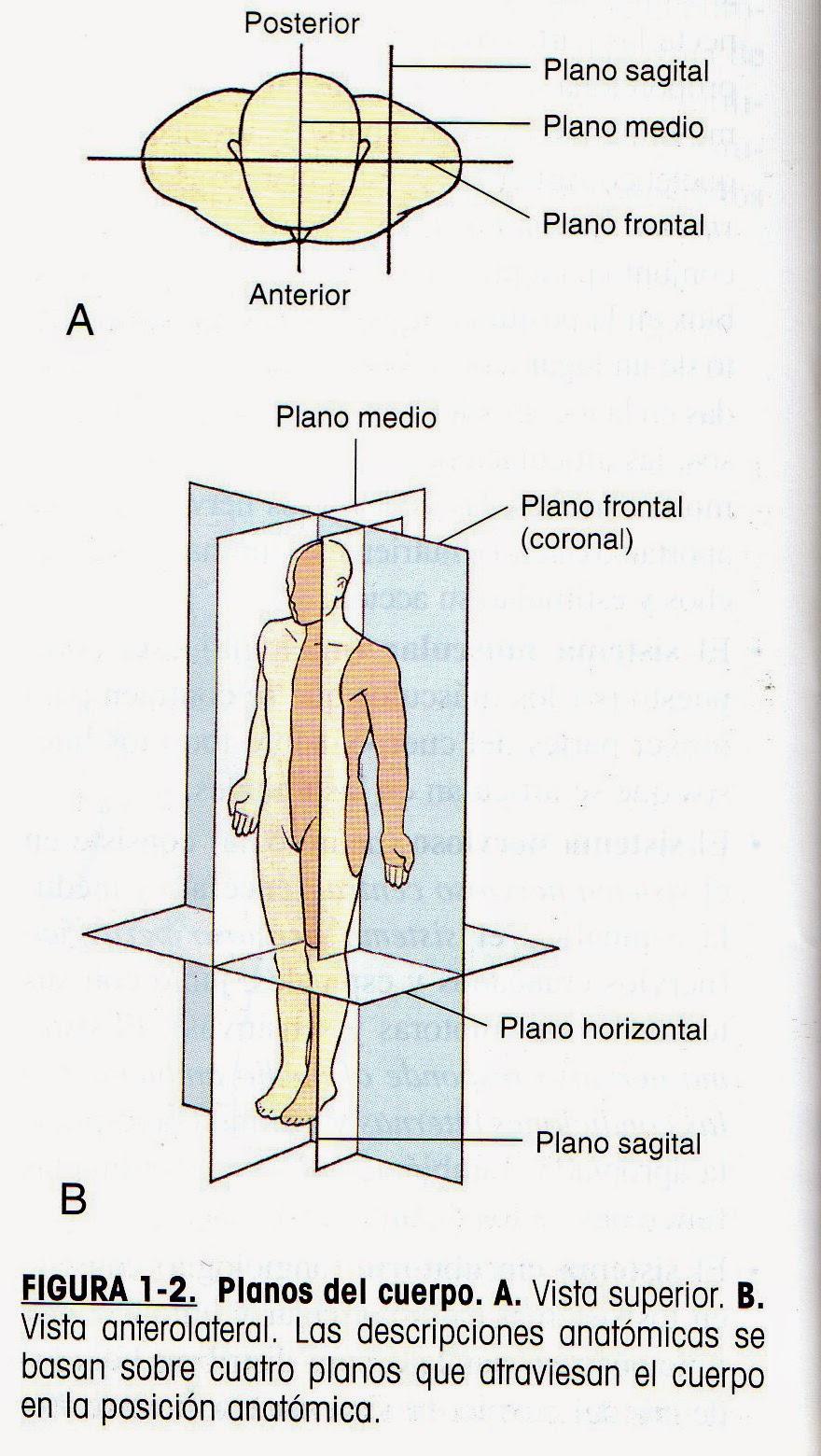 La Botica: Planos anatómicos.