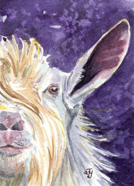A Purple Goat