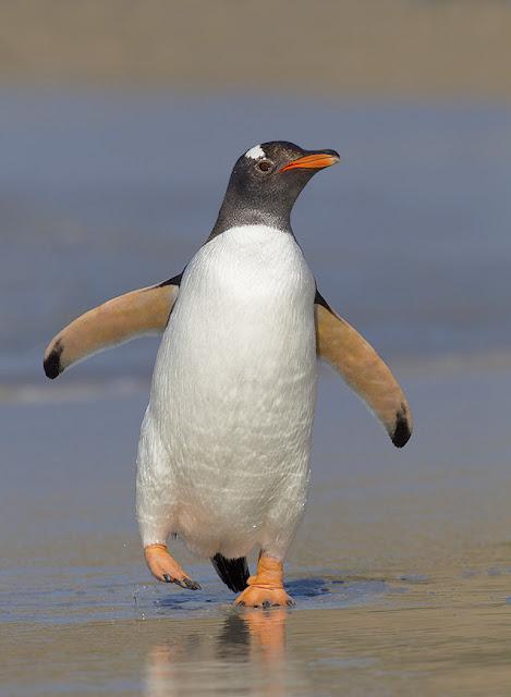 penguin cover photos