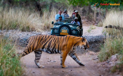 Ranthambore National Park Tour With Colorful Vacations