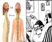 sistem saraf dan kesehatan jiwa