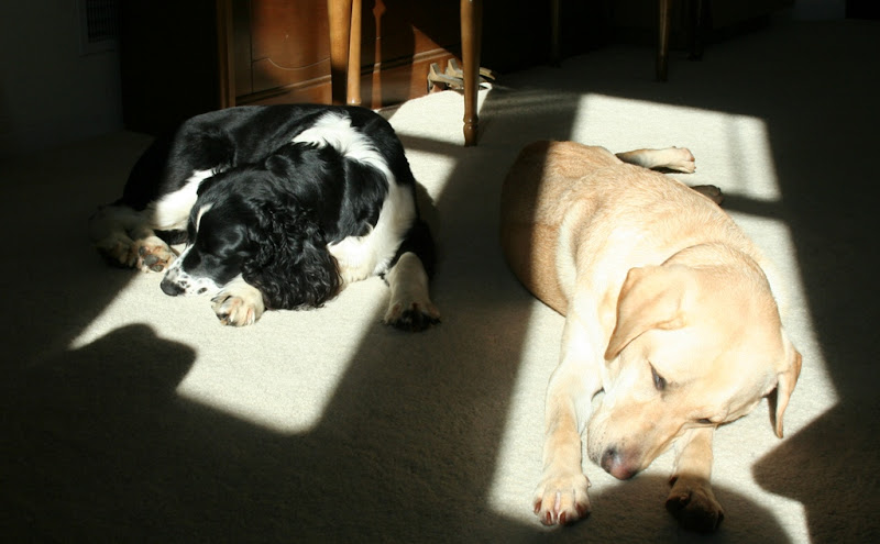 both dogs laying on sunny squares in the carpet, sleeping