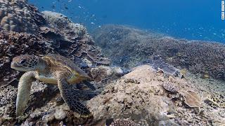 عجائب تحت الماء في خرائط Google