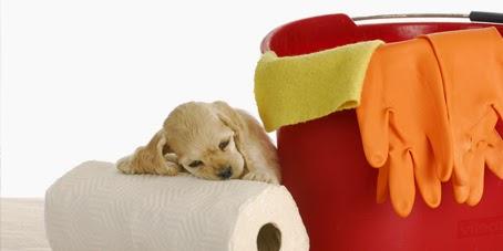 http://eaibeleza.com/animais/seu-cao-pode-fazer-xixi-quando-voce-pede-sabia-o-o/