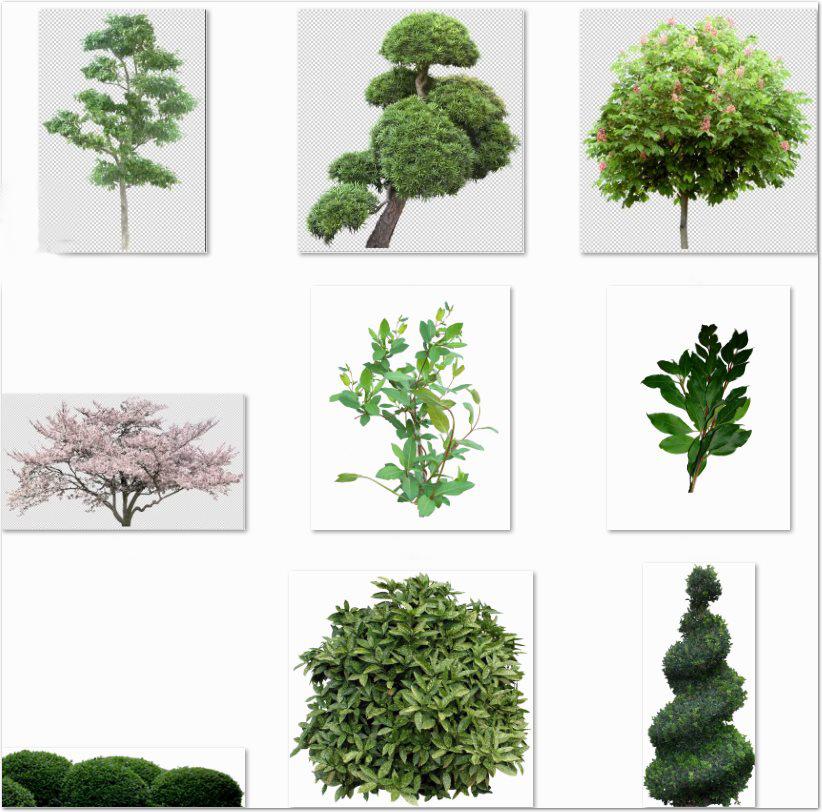 67 arbustos y plantas de jardin en png 77 mb descargar for Arbustos con flores para jardin