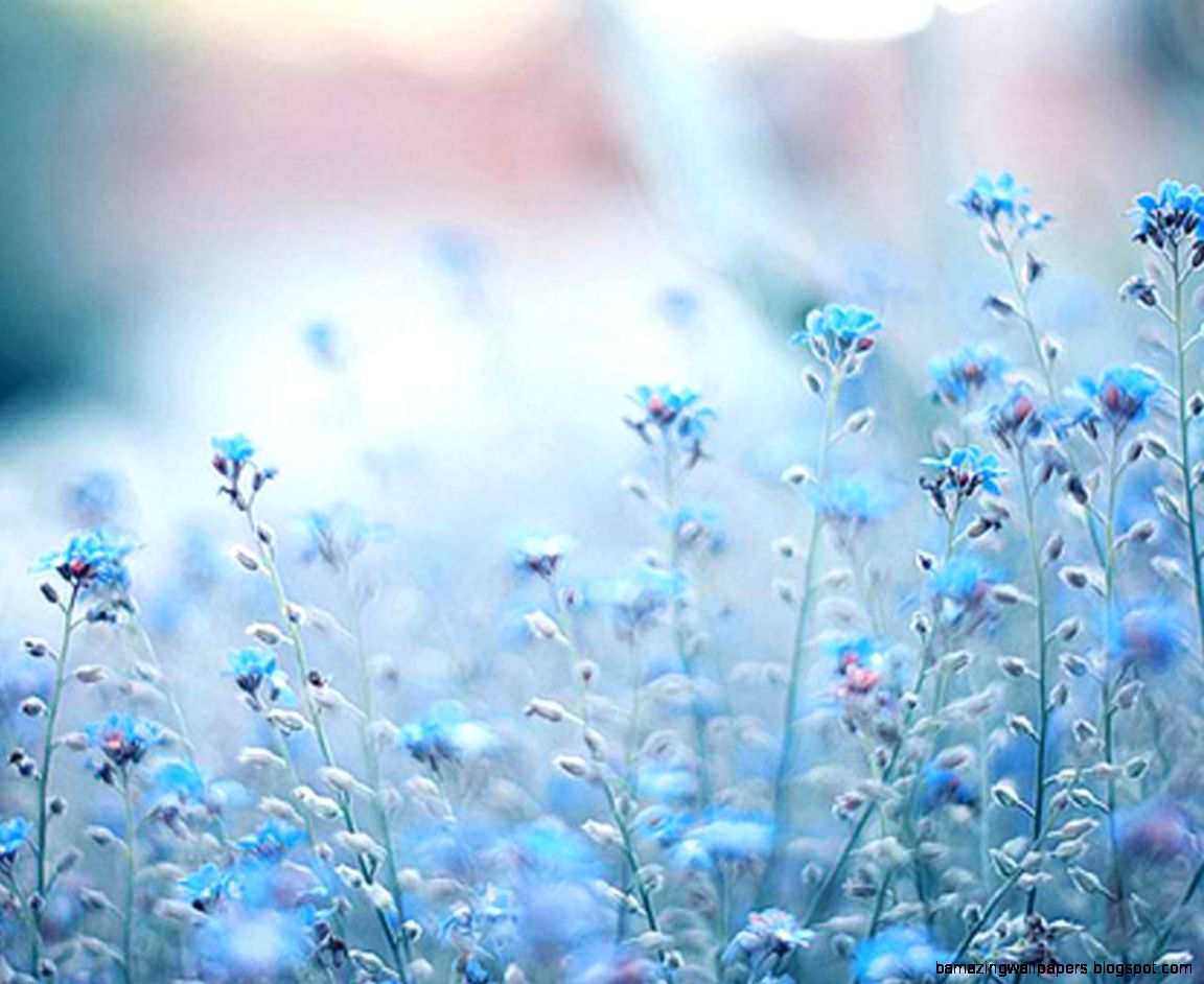 Blue flowers tumblr photography amazing wallpapers view original size izmirmasajfo
