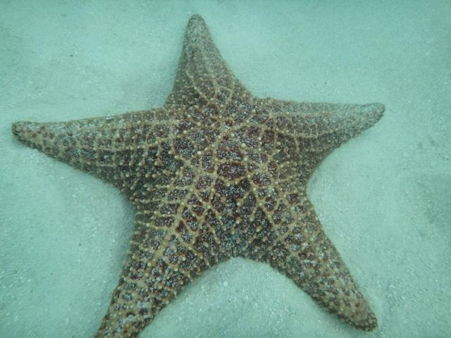 Estrellas de Mar en la Piscina Natural de Punta Cana