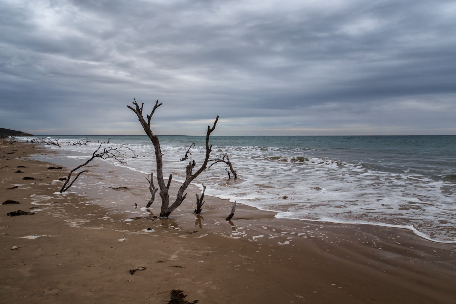 tree on three mile beach wilsons promontory