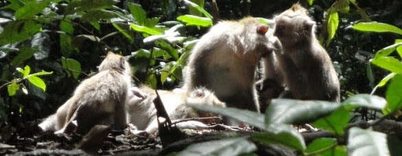 Ubud Monkey Forest - Ubud Village Gianyar Bali Holidays, Tours, Attractions