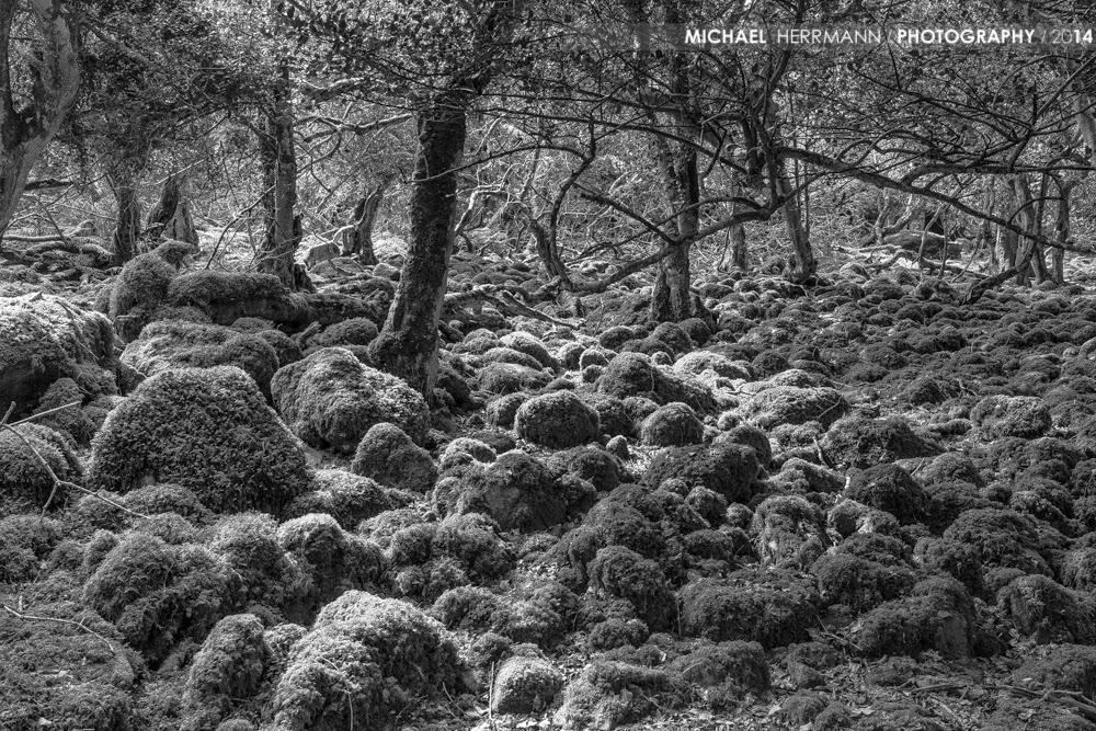 Fotografie workshops, Kerry, Irland