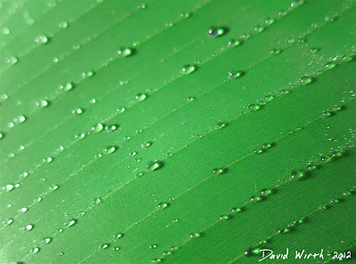 Leaf Close-Up