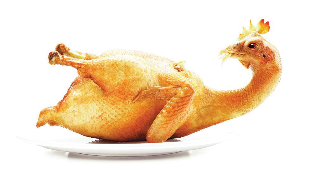 Kannibalistisk kyllingesteg
