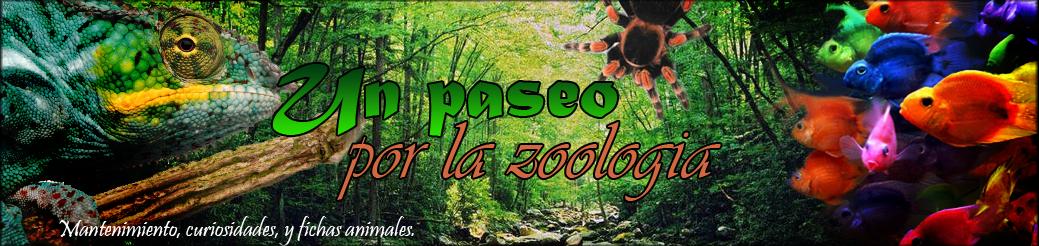 http://unpaseoporlazoologia.blogspot.com.es/