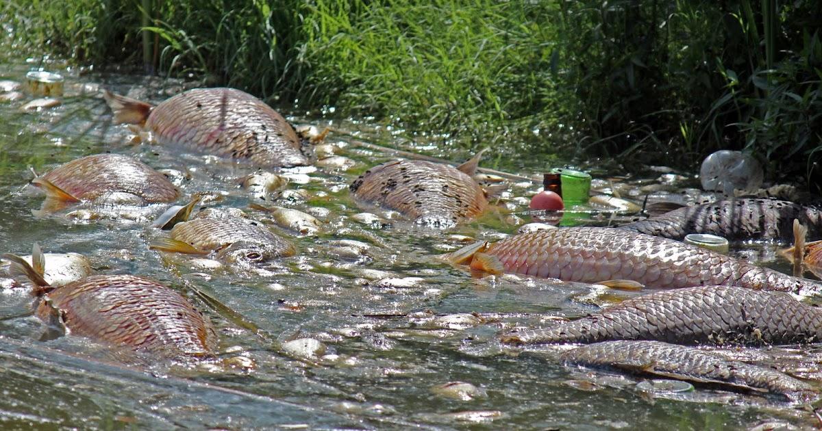 Dallas trinity trails massive fish kill in great trinity for Private fishing ponds near me