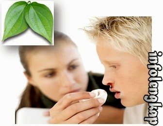 obati mimisan,penyebab mimisan,atasi mimisan,daun sirih