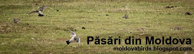 Păsări din Moldova