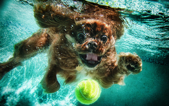 Underwater Photos of Dogs wooow - Neat-Pets ( Dogs & Cats )
