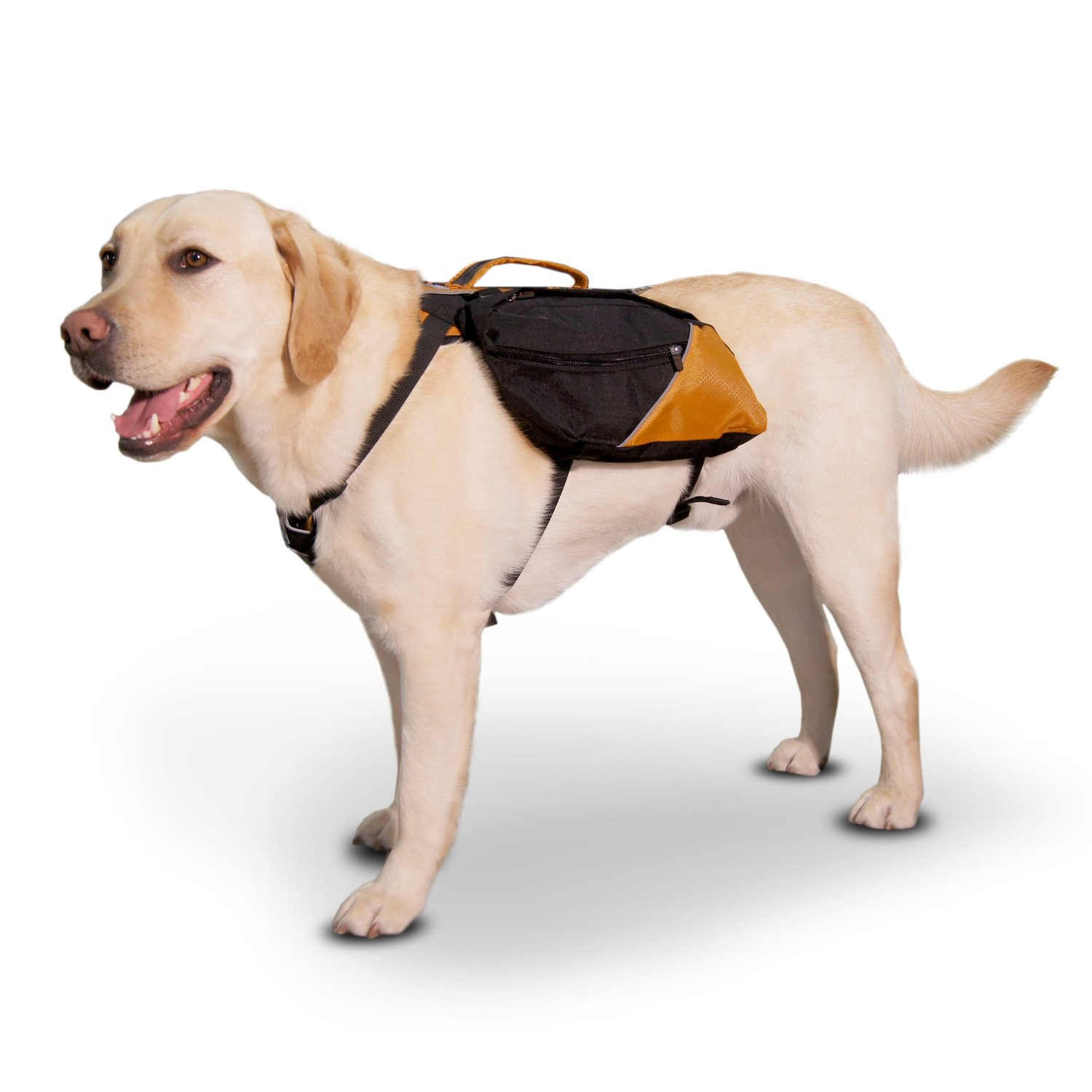 Find Your Ideal Dog Backpack