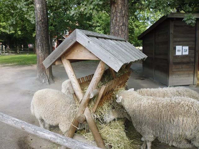 Ovejas en la granja infantil