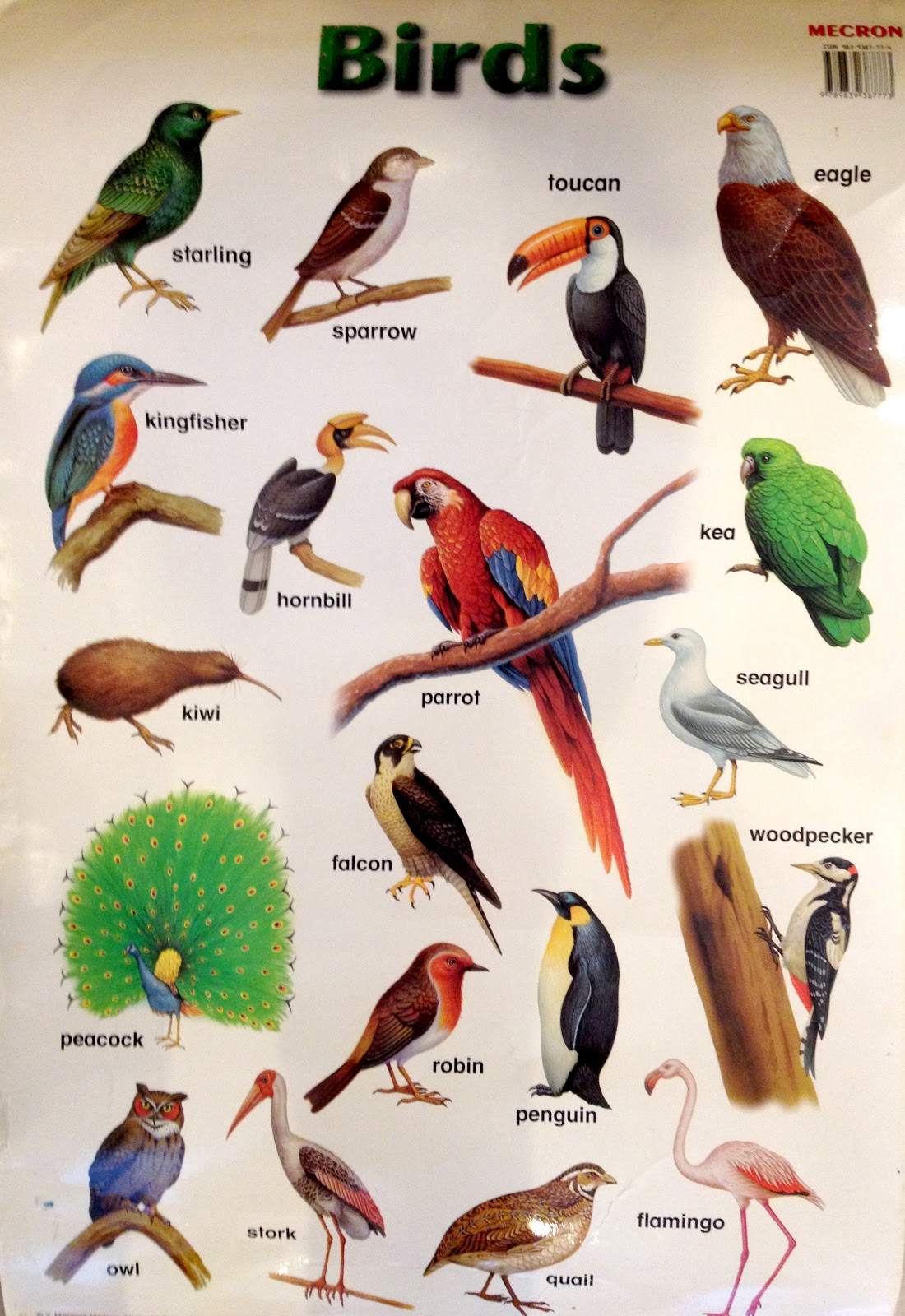 God created Birds Different Kinds Of Birds