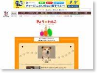 http://www.fujitv.co.jp/meza/wanko/wsp1303.html