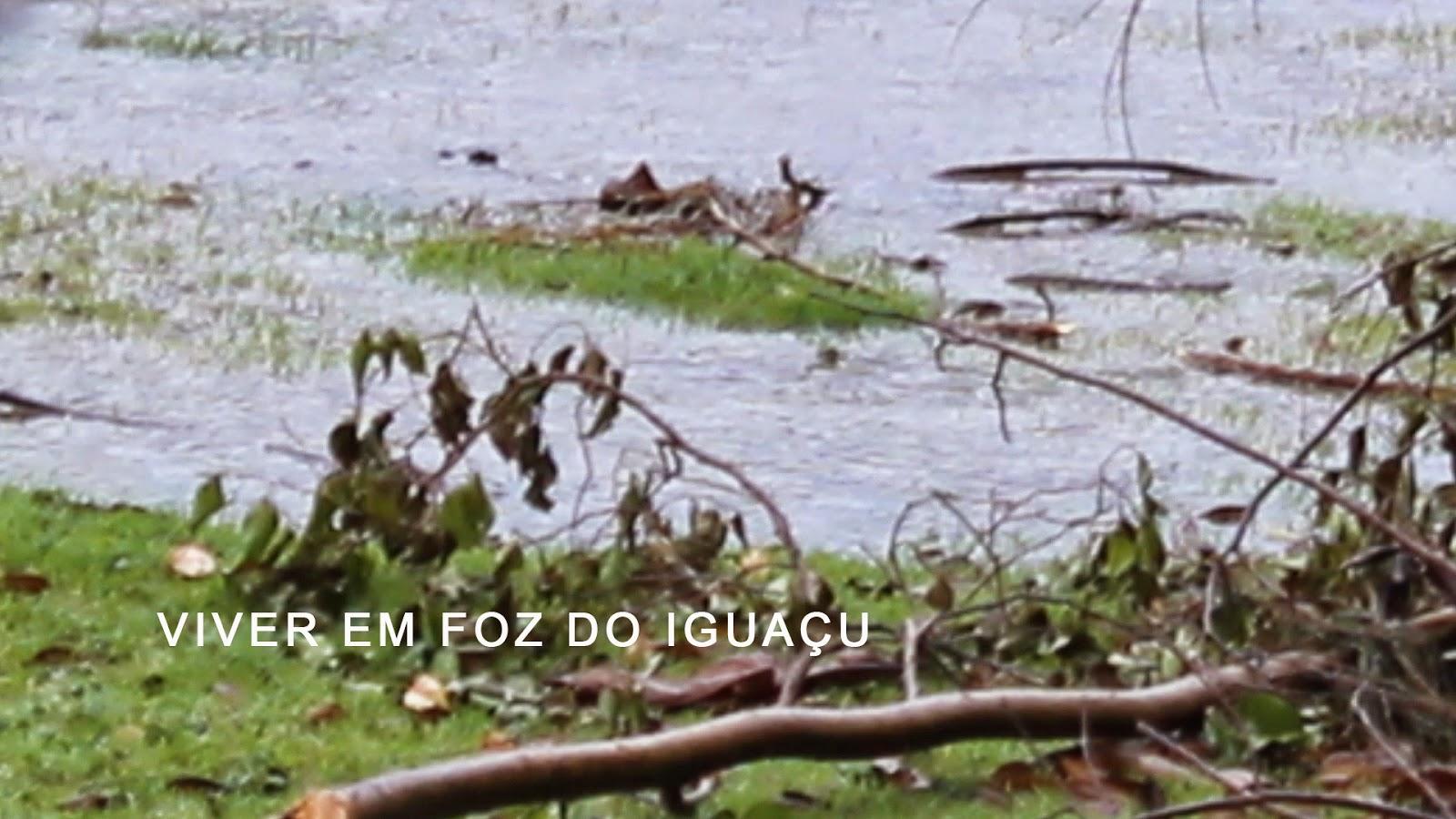 Tempo e Temperatura em Foz do Iguaçu no primeiro domingo de maio
