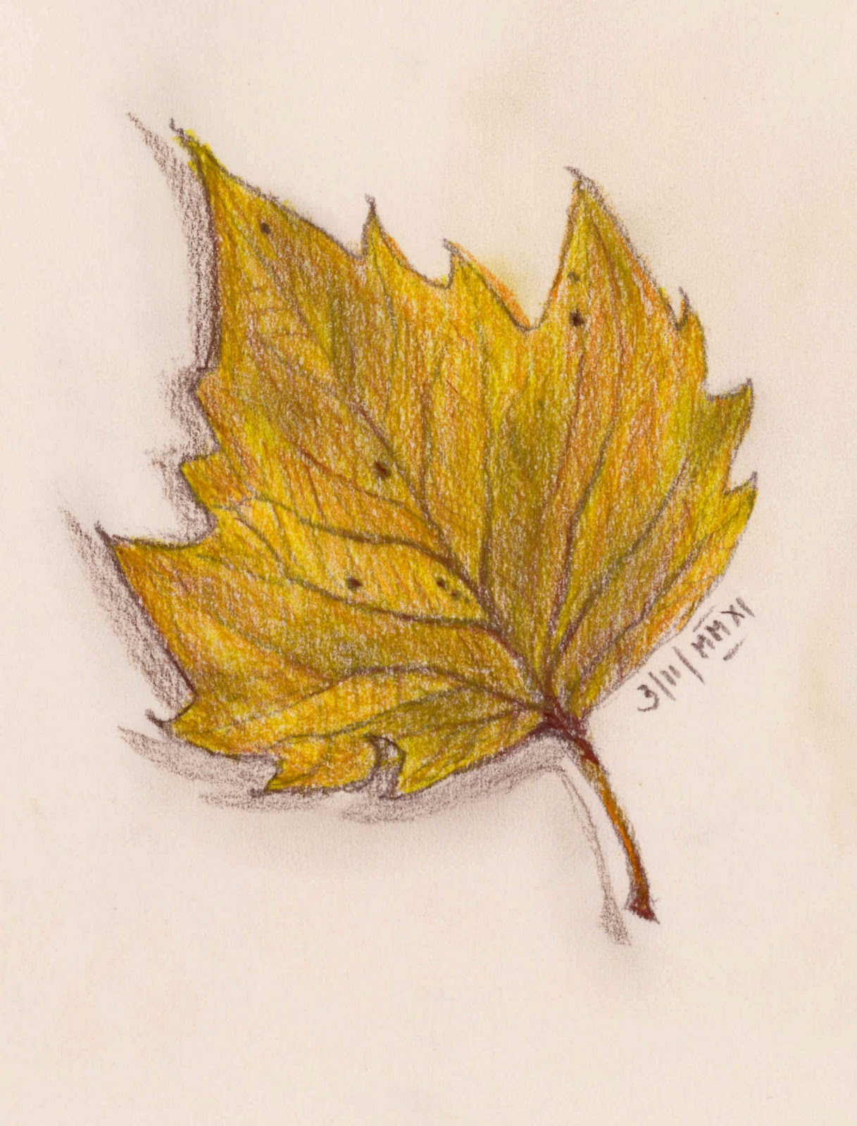 Colour pencils later in the evening once i was homepencil drawing of a leaf