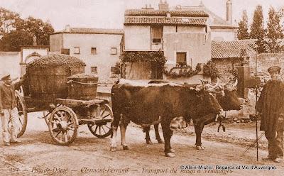 CPA vendanges et vendangeurs en Auvergne