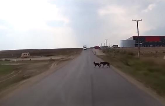 Perros y mascotas