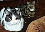 Juju the Wonder Cat and Matilda (Mattie) the Marvelous