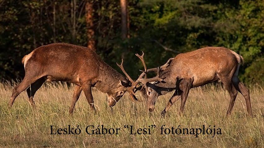ERDŐZÚGÁS -  Leskó Gábor fotónaplója