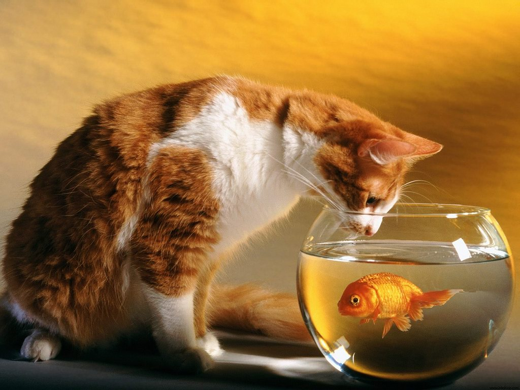 funny pictures gallery cat and fish wallpaper amazing