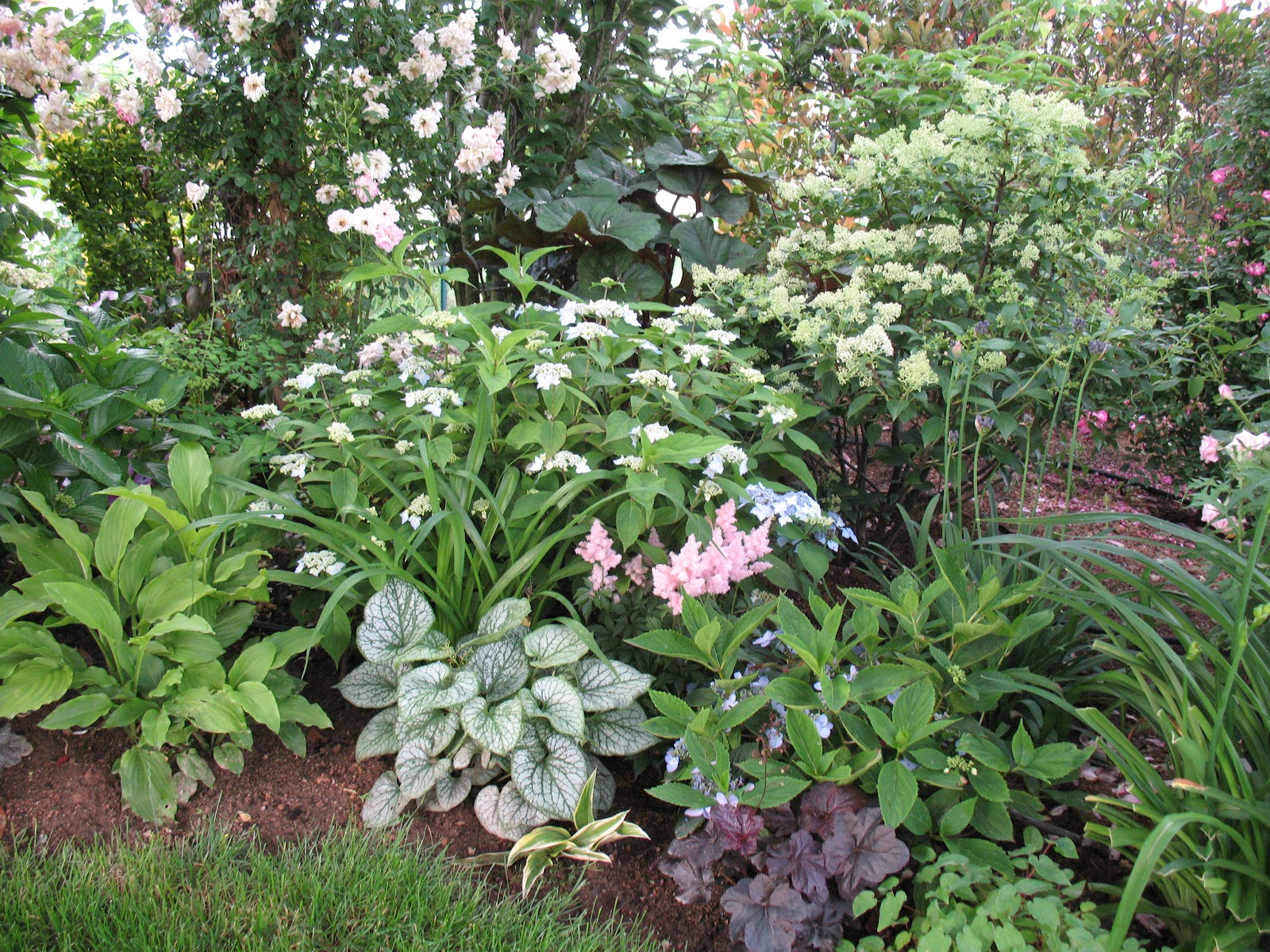 Roses du jardin ch neland hydrang a paniculata kyushu - Comment faire des boutures d hortensia ...