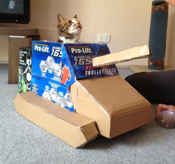 Funny cats - part 83 (40 pics + 10 gifs), cat pics, cat in box tank