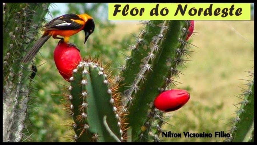 Flor do Nordeste