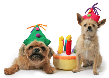Quirky Dog Toys