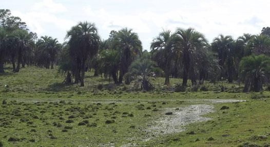 Campos Sulinos