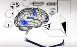 Δημιούργησαν μοντέλο ανθρώπινου εγκεφάλου