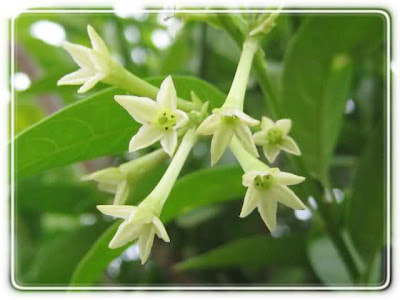 sự tích hoa dạ lan hương 06