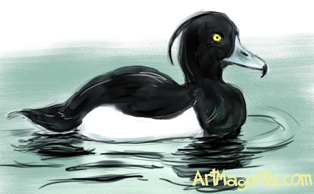 Tufted Duck sketch painting. Bird art drawing by illustrator Artmagenta